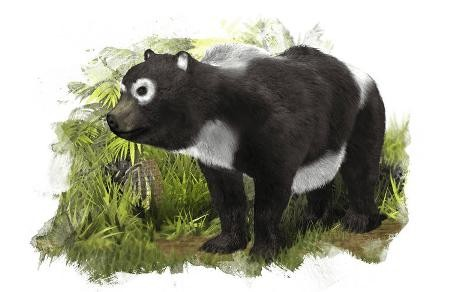Ancient Panda Related to Endangered Giant Panda Discovered in Spain