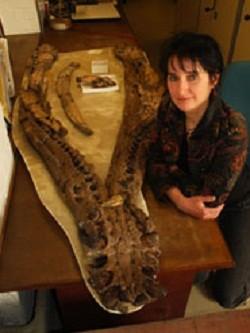 Pliosaurus: Lochness Monster-Like Animal Also Had Arthritis Problem