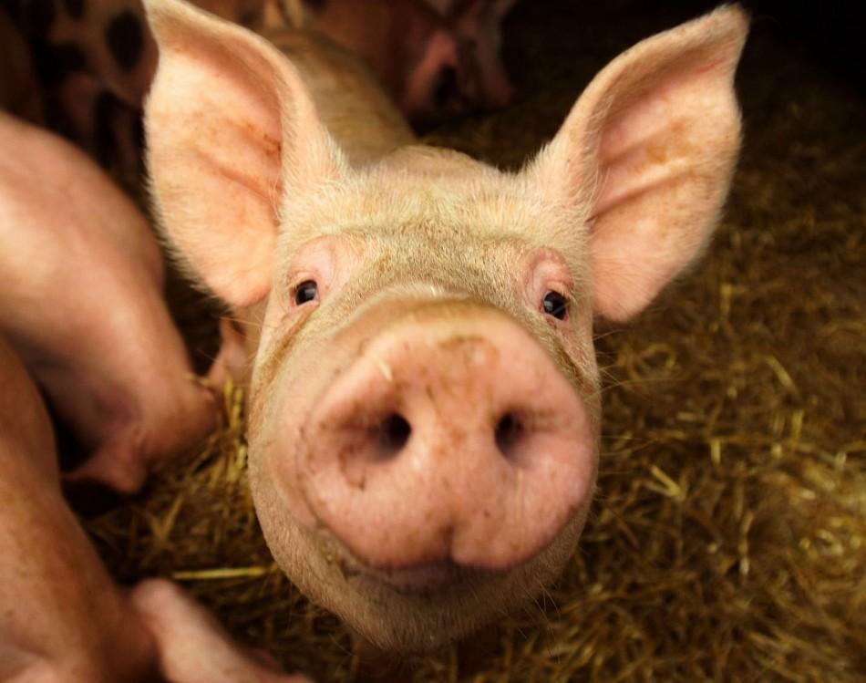 Pork Consumption