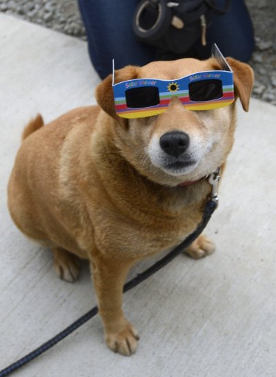A dog is seen wearing a solar viewer during an annular solar eclipse at a temporary shelter for evacuees from last year039s Fukushima nuclear disaster, in Koriyama, Fukushima prefecture