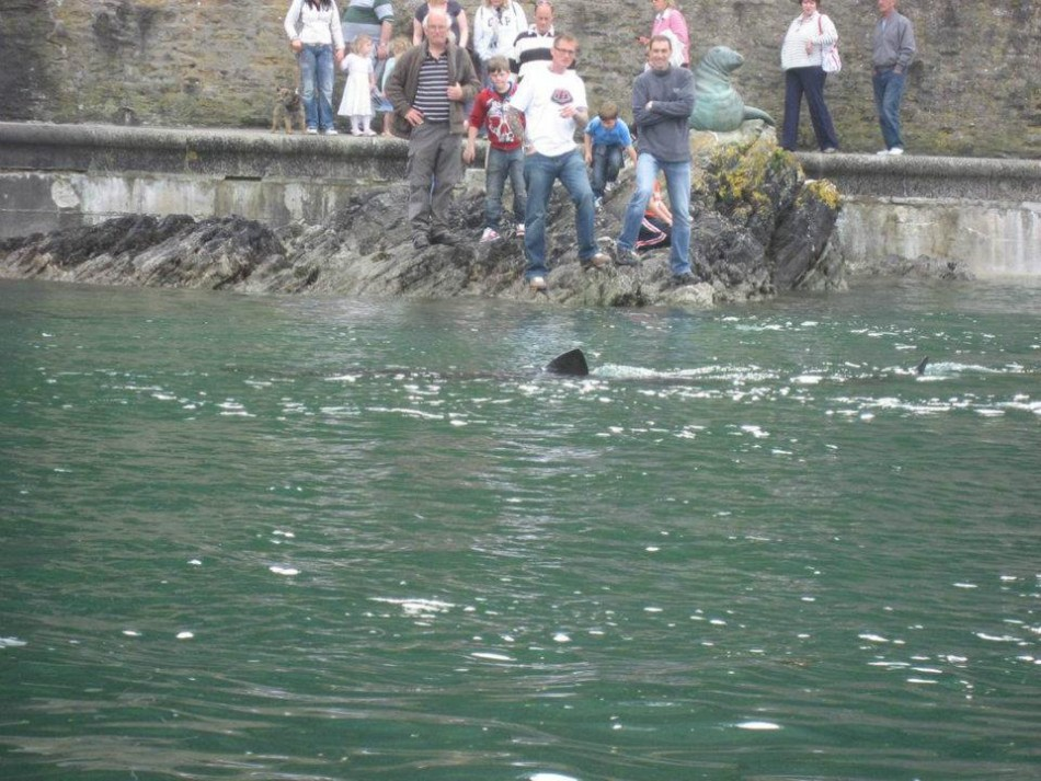 The basking shark was seen swimming into Looe harbour in Cornwall (Facebook/BBC Cornwall)