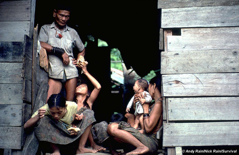 Tabloid Forced to Apologise After False Incest Claims About Penan Tribe