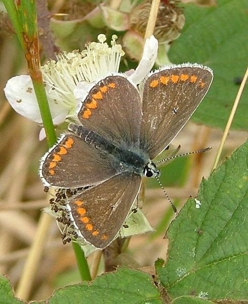 Climate Change Forces Butterflies To Fly Towards North