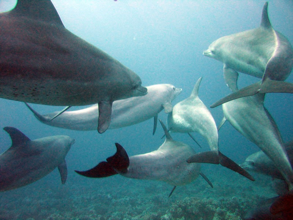 Scientists Have Invented A Device That Could Help Us To Talk With Dolphin