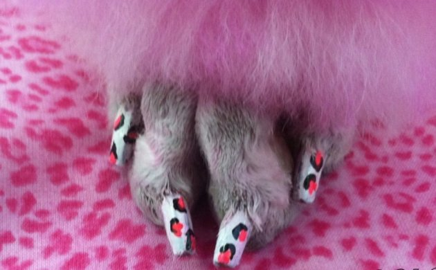 Doggie Nail Art