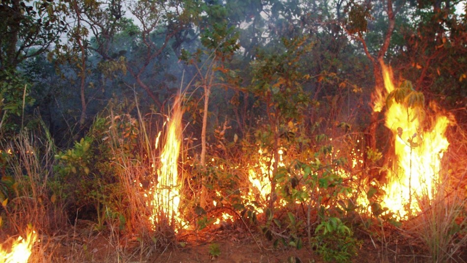Nasa's Predicts Milder Amazon Fires in 2012