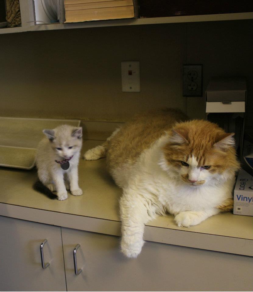 Garfield is World's Fattest Cat