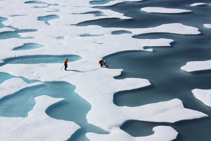 Microscopic Plants Discovered Underneath Thick Arctic Ice, Says Nasa Scientists