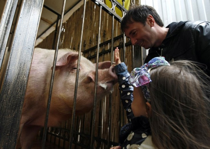 A girl touches the pig named Funtik at the Euro 2012 fan zone downtown Kyiv
