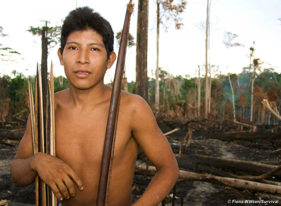 Britain Concerned for Uncontacted Awa Tribe: MPs Call on Brazil to Stop Logging to save World's 'Most Threatened' Tribe