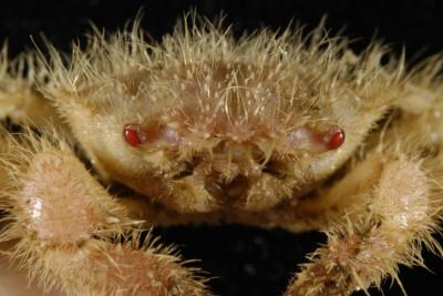 Researchers Discover Rare Deep-Sea Animal Species in Kermadec Ridge