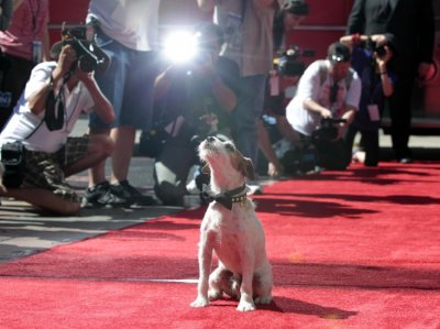 The dog Uggie, featured in the film quotThe Artistquot, is pictured after leaving his paw prints in cement in the forecourt of the Grauman039s Chinese theatre in Hollywood