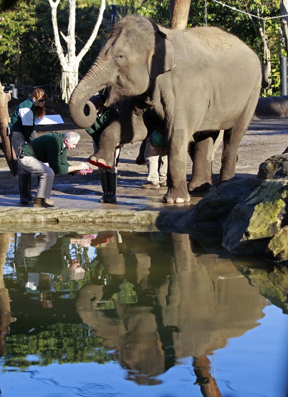 Elephant keeper Miller takes the footprint of elephant Pak Boon at Taronga Zoo in Sydney