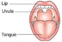 Scientists Find Cure for Mouth Cancer