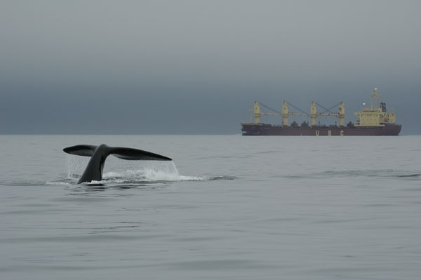South Korea Hints Whaling Plans May not Proceed After All