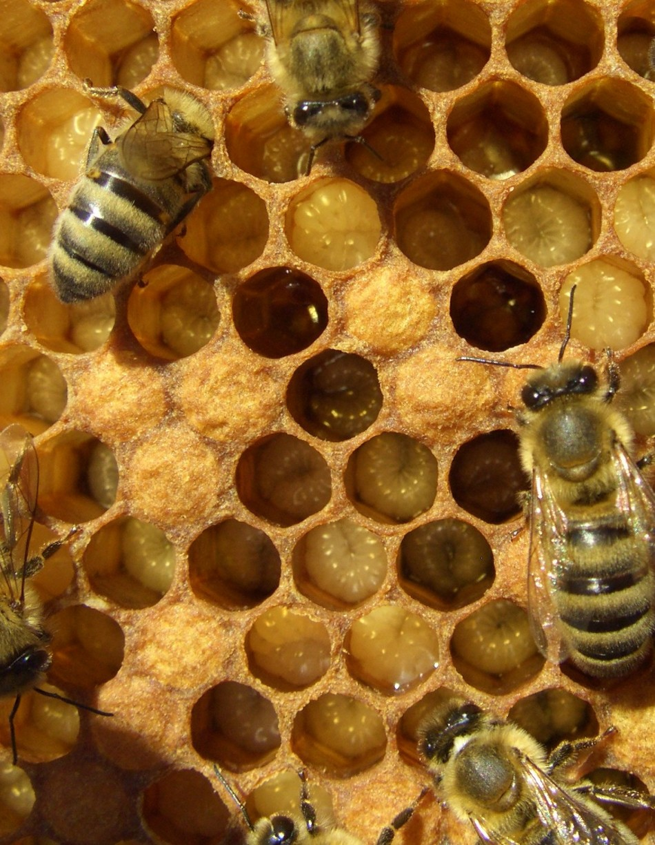Bees Have Turn Back Time and Reversed Aging Effects