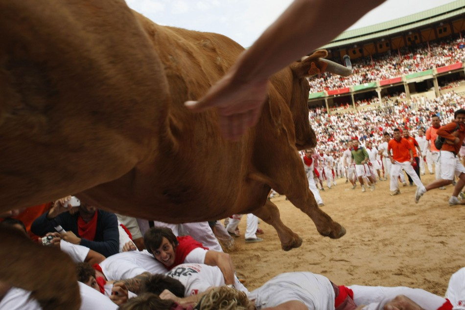 Fighting cow leaps over bull runners in Plaza de Toros following first running of the bulls of San Fermin festival in Pamplona