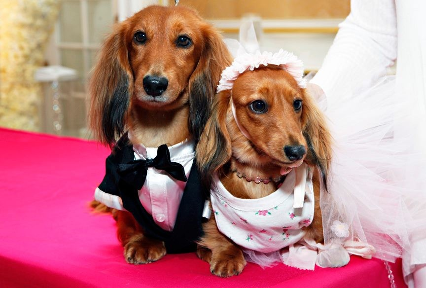 Most Expensive Dogs Uk