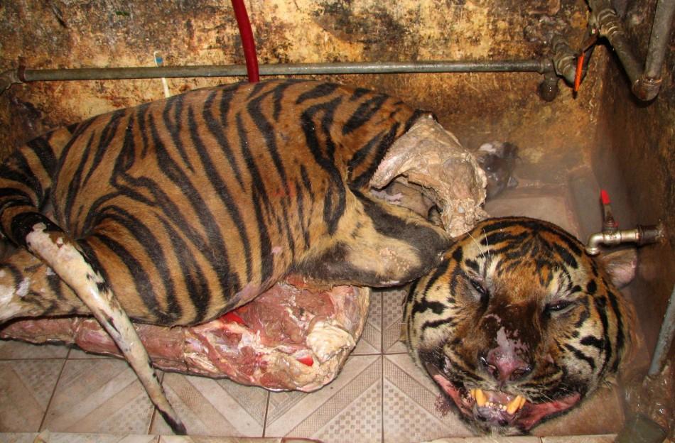 Tiger carcasses