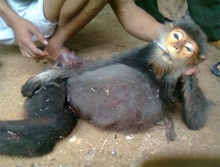 Monkey forced to smoke