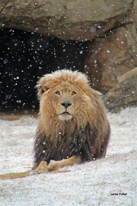 Snow Johannesburg 1