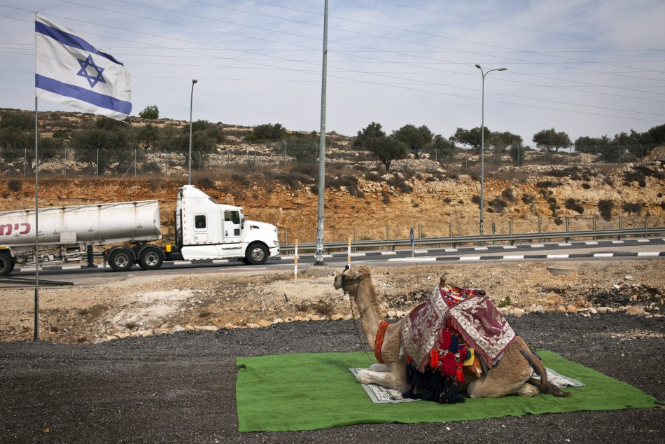 A camel used to take tourists for rides sits beside a road near Modiin