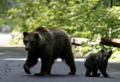 Two Bears on a coutry road