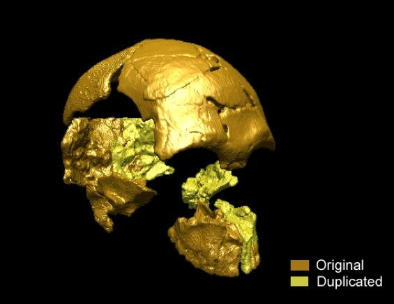 Oldest Modern Humans Fossils Found in Southeast Asia