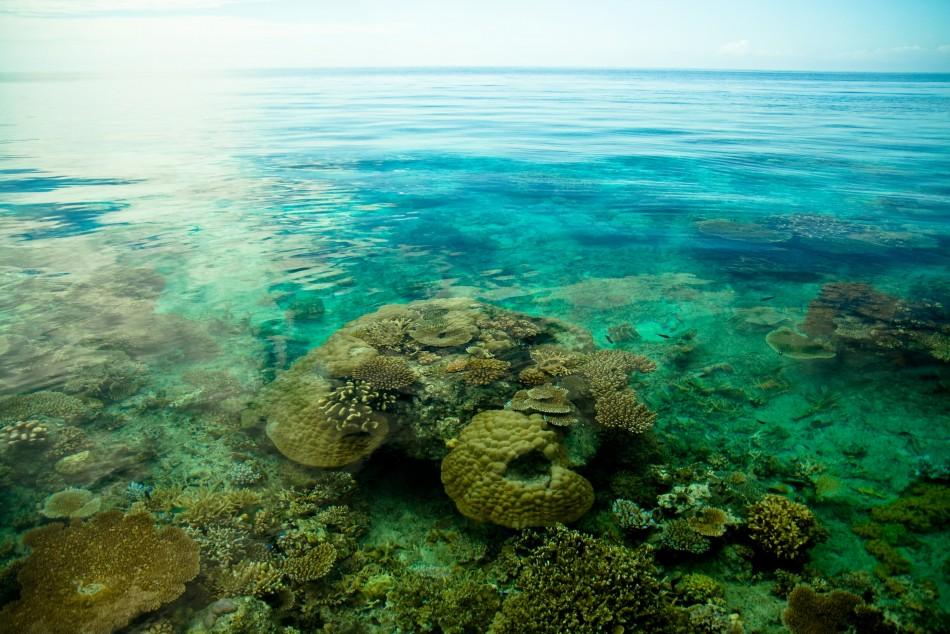 Pacific Oceanscape