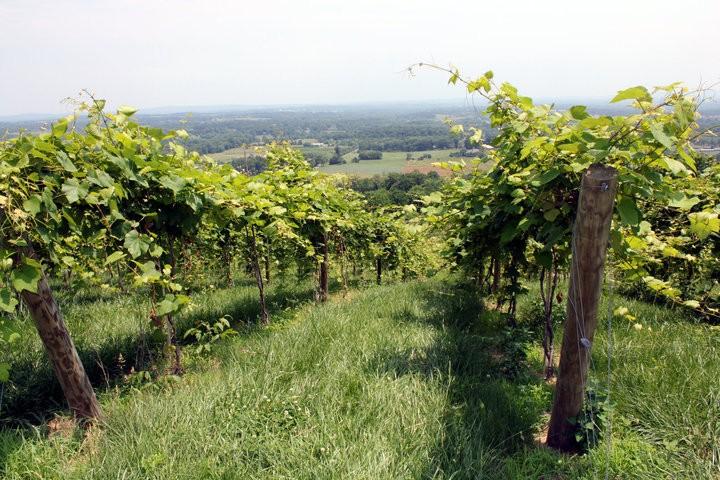 Bluemont Vineyards