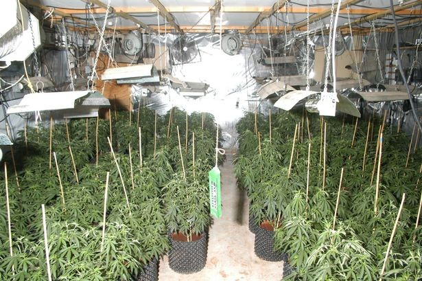 The couple were growing large quantities of cannabis from their farmhouse (Lincolnshire Police)