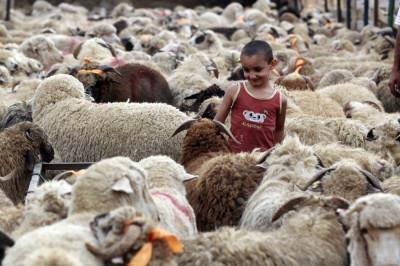 Livestock market