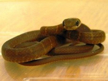 The snake was discovered on a plane after flying from Cancun, Mexico. (Scottish SPCA)