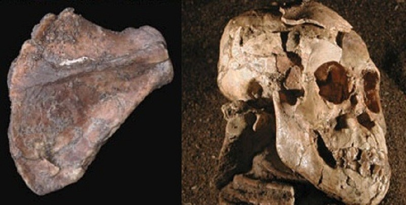 Selam fossil shows human evolution
