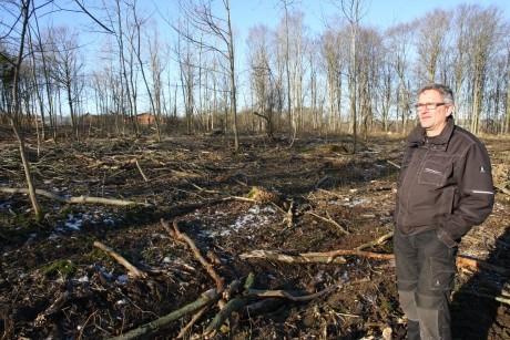 Ash trees in Denmark