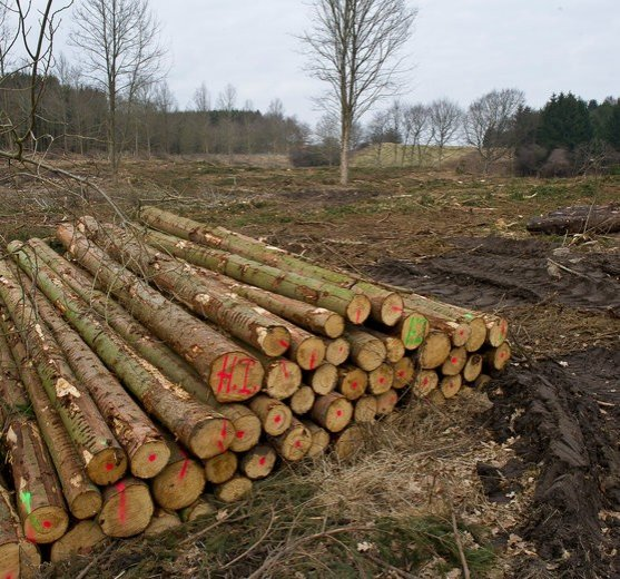 Ash trees killed in Denmark