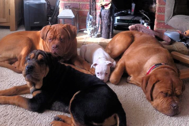 The dogs belonged to the 71-year-old's daughter Beverley (Facebook)