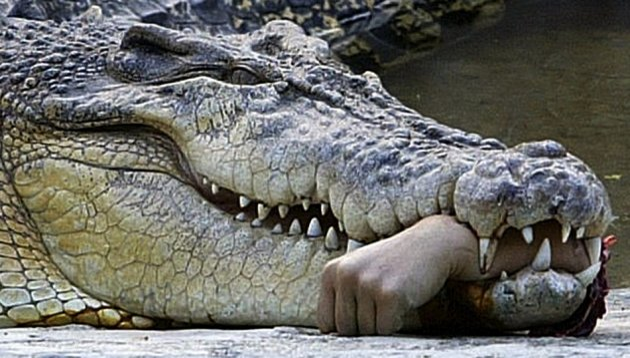 Man eaten by crocodiles in Philippines