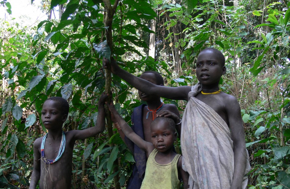Local children with wild Arabica.