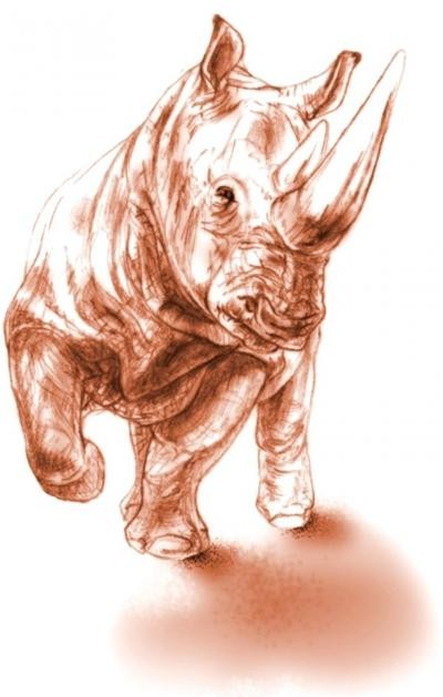 Illustration of 2 Horned Rhino