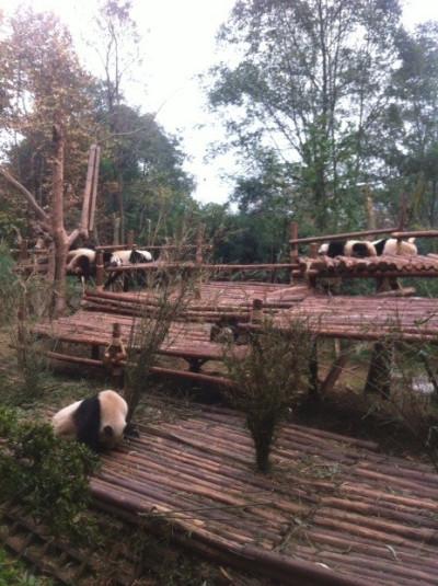 Protecting the Pandas