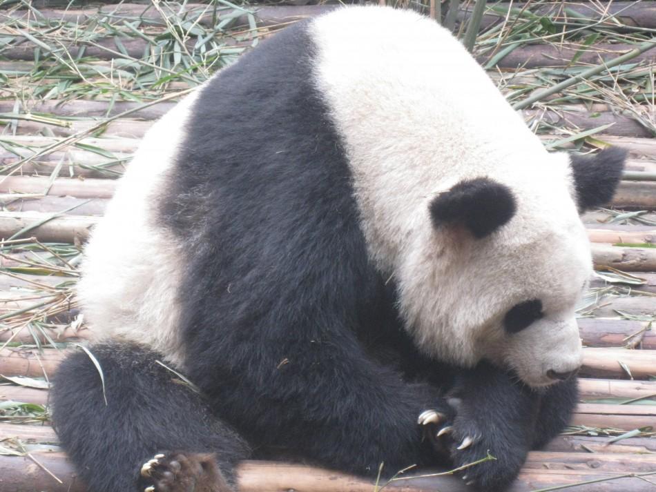 More Pandas