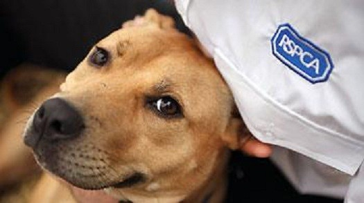 RSPCA campaigned for Staffs