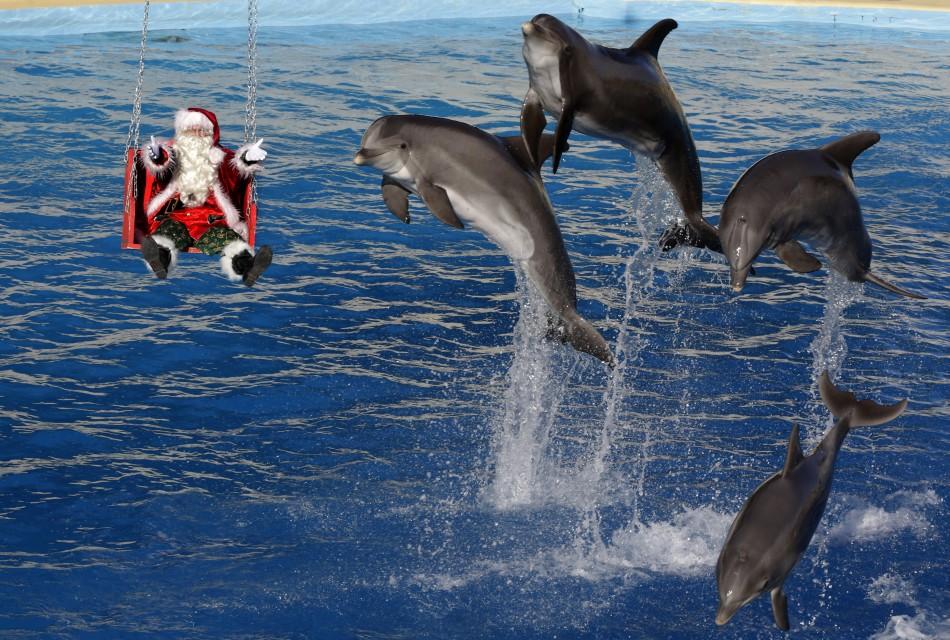 Dolphin-friendly
