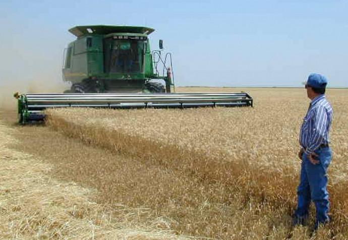 U.S. wheat farm