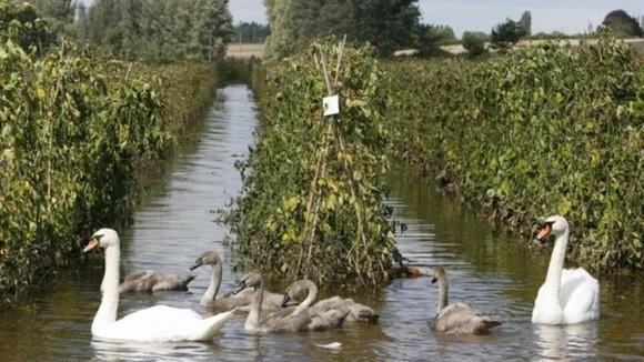 UK farm flood
