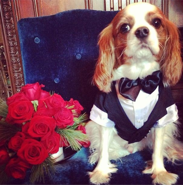 Our boy Charlie all ready in his tuxedo, Harris tweeted