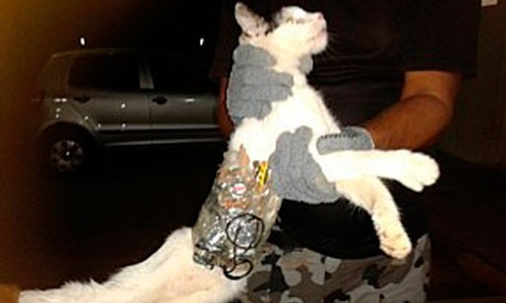 Cat organised Prison Break Out