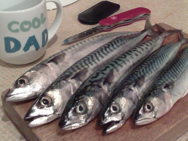 Mackerel wars