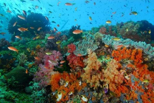 Tubbataha Reef and Other Beautiful Coral Reefs of the World (PHOTOS)